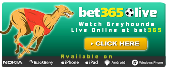 Greyhound Racing Live