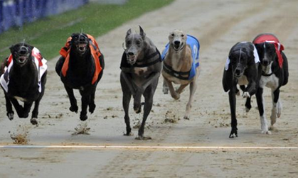 online greyhound racing