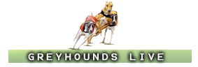 Watch Greyhound Racing